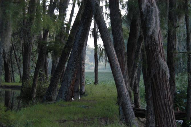 Le long du chemin à Shingle Creek