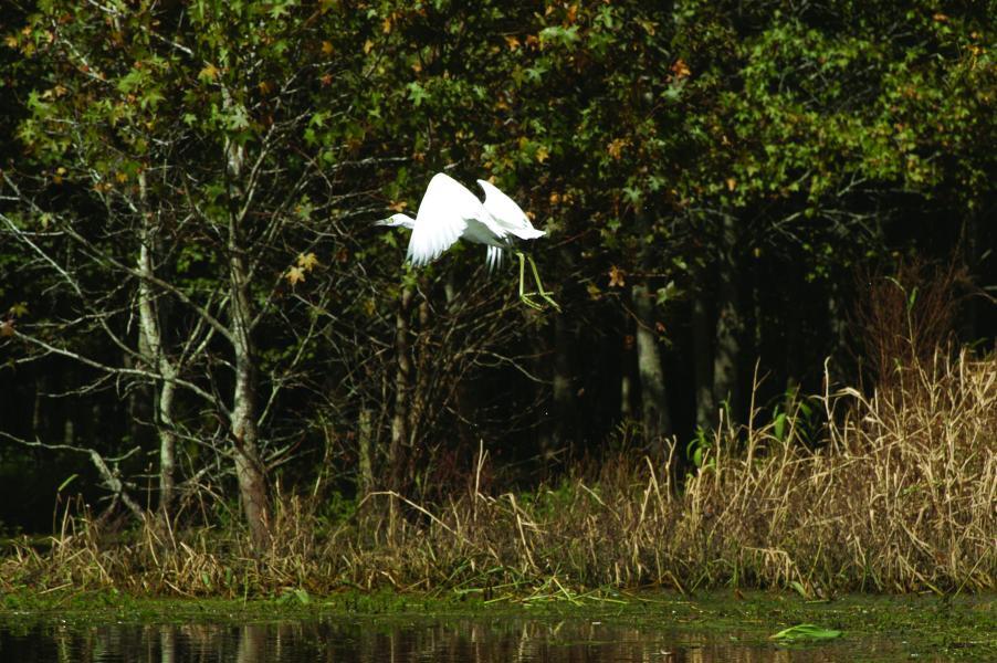 Nature- Bird
