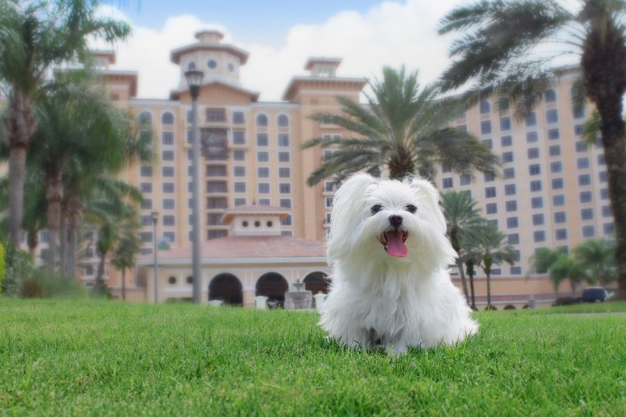 Rosen Shingle Creek Pet Stay