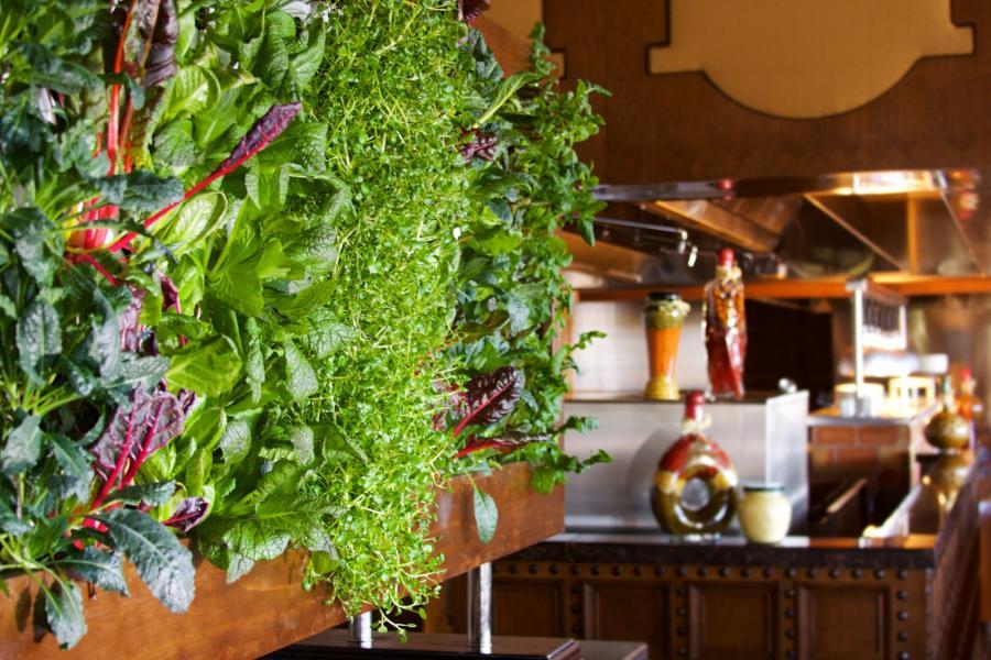 Cala Bella Herb Garden Wall